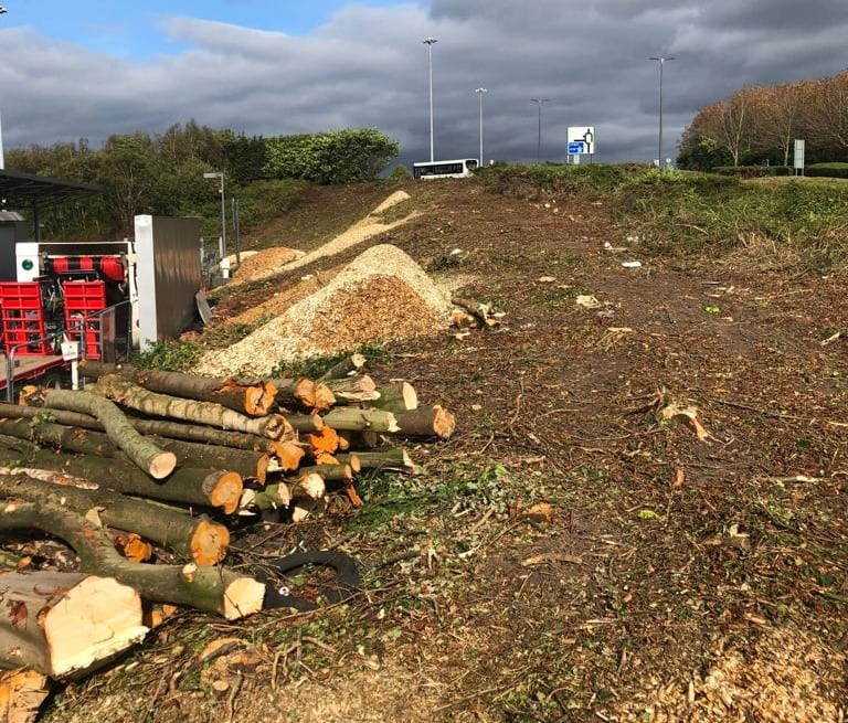 Tree Site Clearance at Fazakerley