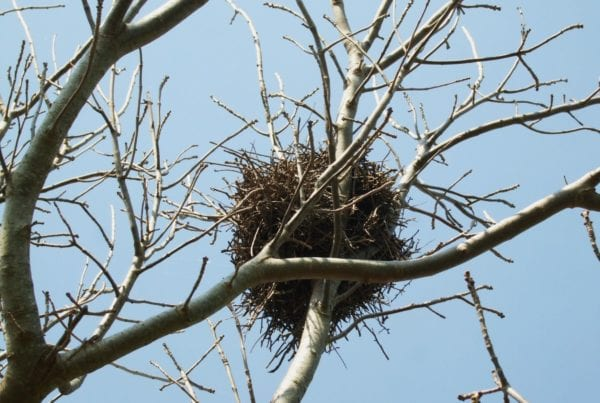 Don't forget nesting bird season
