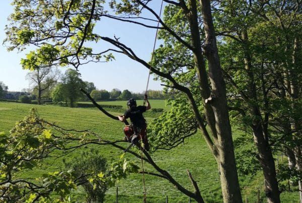 Arboricultural Apprentice wanted to join our friendly & hardworking team